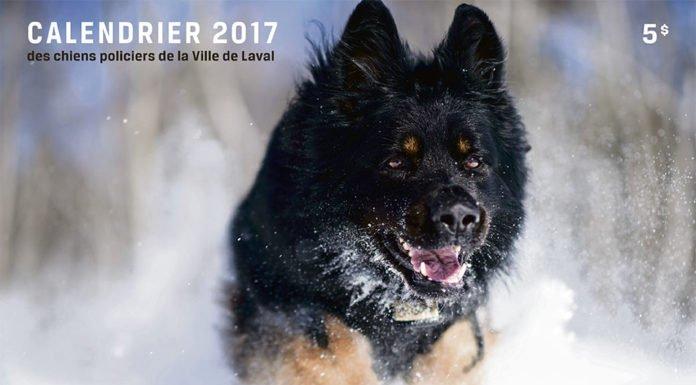 Laval Police Dog