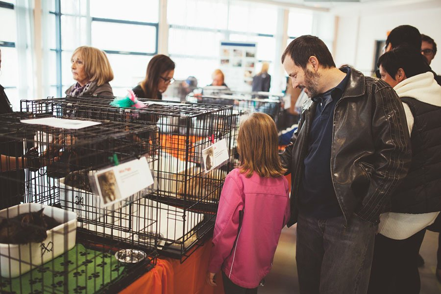 Beginning in January 2019, all pets in Laval must be microchipped.
