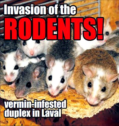 Vermin infestation in two Chomedey homes remains unabated